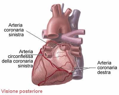 coronarie cuore quante sono